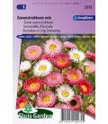 acroclinium (Helipterum roseum)