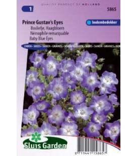 flor de los ojos azules (Nemophila menziesii)