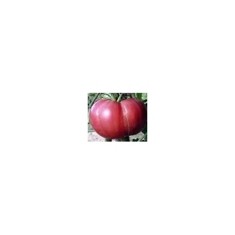 tomate gregory altai