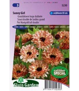 calendula Sunny Girl (Calendula officinalis)