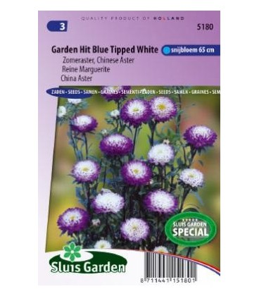 aster de la China hit blue (Callistephus chinensis)