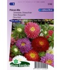 aster de la China princess choice (Callistephus chinensis)