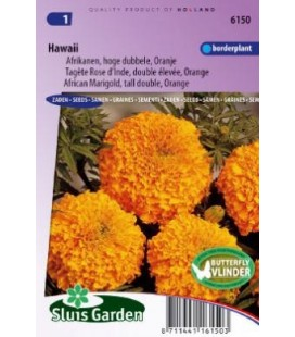tagete naranja doble Hawaii (Tagetes erecta)