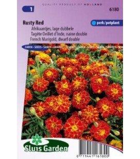 tagete doble enano Rusty red (Tagetes patula nana)