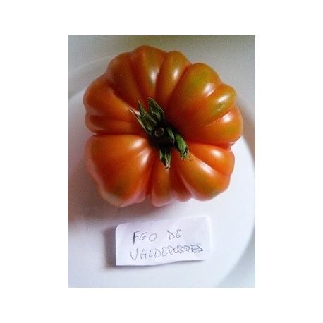 tomate valdeporres