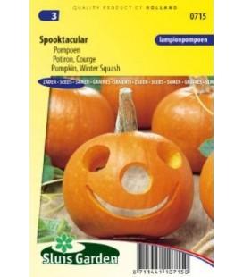 calabaza halloween Spooktacular