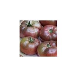plantel de tomate cherokee purple