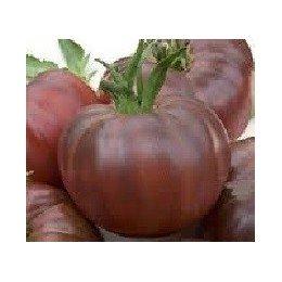 plantel de tomate Black russian