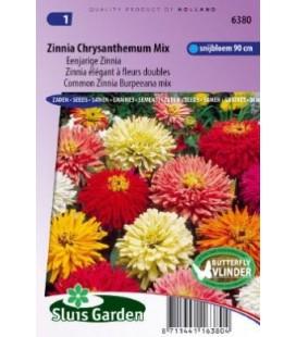 zinnia flor de crisantemo (Zinnia elegans)