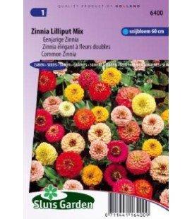zinnia lilliput (Zinnia elegans)