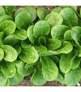 canonigo vit (semillas ecologicas)