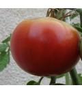 Tomate Aretxabaleta (semillas ecológicas)