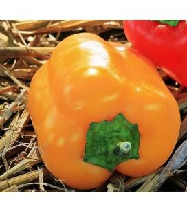 pimiento California wonder amarillo (semillas no tratadas)