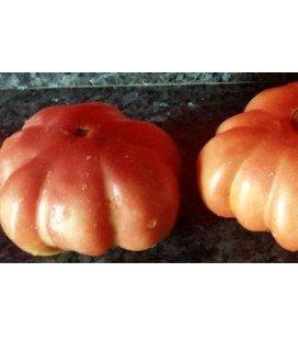 tomate de Lloret (semillas ecologicas)