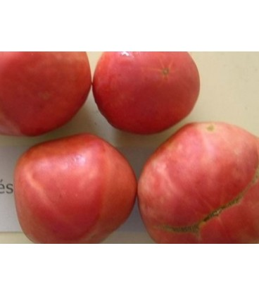 tomate frances (semillas ecologicas)