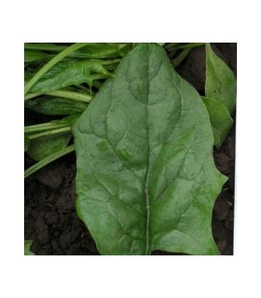 espinaca oriental pv 0438 F1 (semillas sin tratamiento)