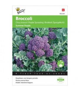 brocoli morado summer purple