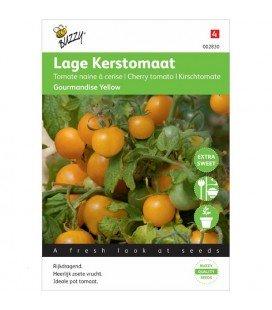 tomate gourmandise amarillo