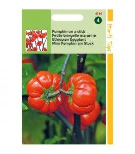 nakati (Solanum aethiopicum) berenjena etíope