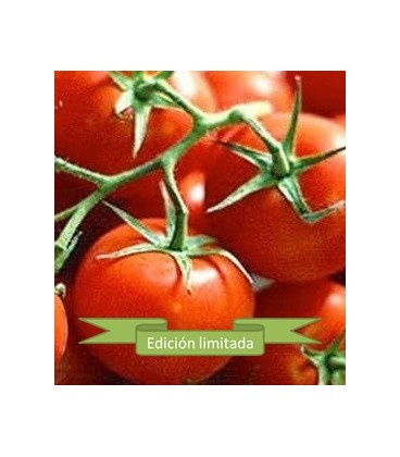 plantas de tomate Ailsa Craig
