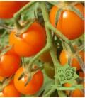 tomate tangerine orange