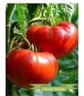 tomate aker´s west virginia