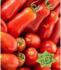 tomate amish paste - plantel
