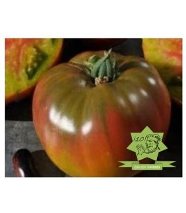 semillas de tomate ananas noire