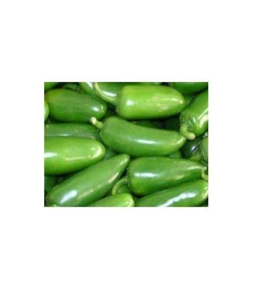 Plantel de pimiento - chile jalapeño