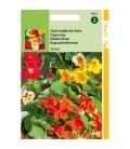 capuchina Jewel mix (Tropaeolum majus nanum)