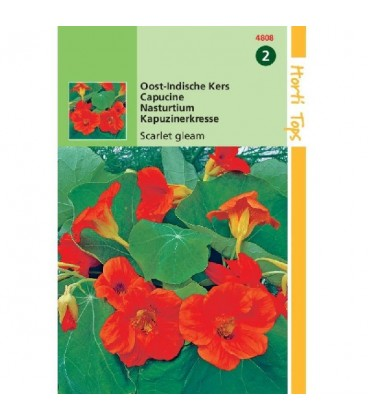 capuchina Jewel mix (Tropaeolum majus nanum)