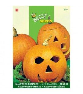 calabaza halloween Jack o´lantern