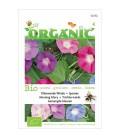 don Diego de dia (Ipomoea tricolor) semillas ecologicas