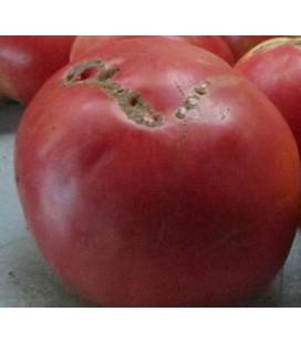 tomate rosa de Aracena