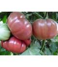 tomate flor de baladre