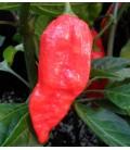 naga morich - plantel ecológico
