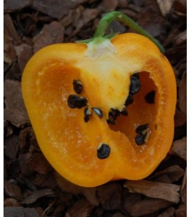 pimiento rocoto amarillo - (semillas ecológicas)