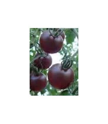 cherry pera negro plnta