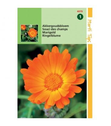 caléndula arvensis
