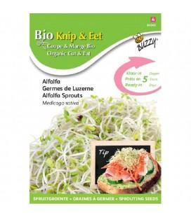 brotes de alfalfa ecológicos