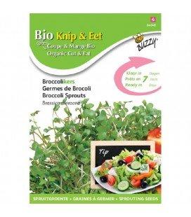 brotes de brocoli ecológicos