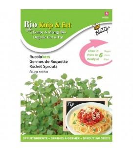 rúcula - semillas para germinar