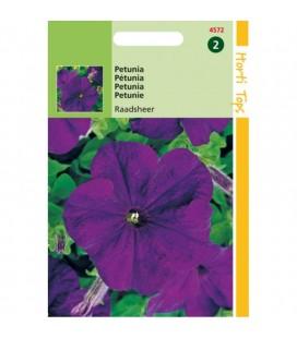 petunia violeta