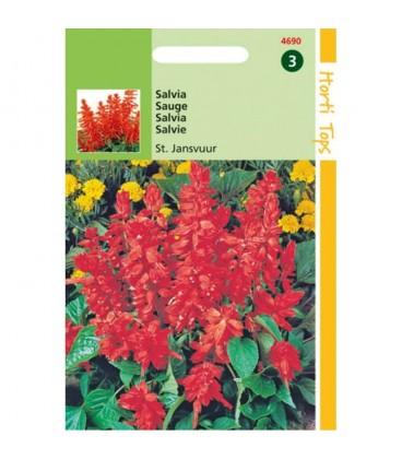 salvia escarlata (Salvia splendens) semillas ecológicas