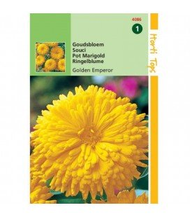 calendula doble amarilla golden emperor (Calendula officinalis)