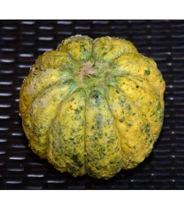 melon zatta (semillas ecológicas)