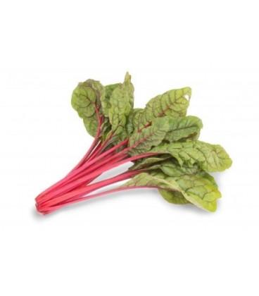 acelga roja intense (semillas sin tratamiento)