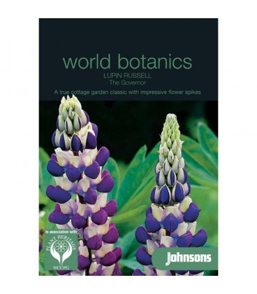 lupino (Lupinus polyphyllus) The Governor