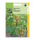 ricino (Ricinus communis)