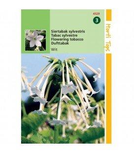 tabaco de flores (Nicotiana sylvestris)